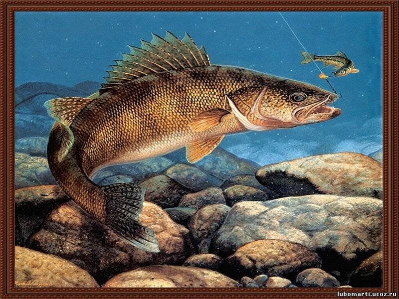 Ловля рыбы сонник рыбалка